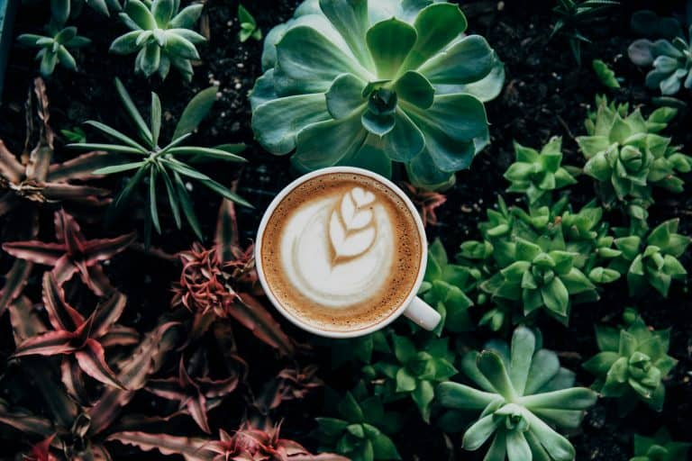 Latte cup with plants