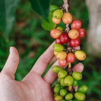 Best Kona Coffee Beans To Try (and where to buy them)