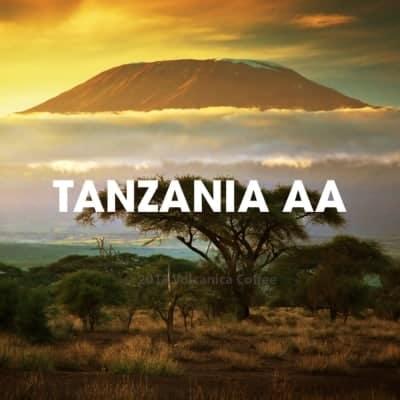 Tanzania coffee beans