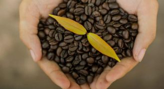 Lowest acidity coffee beans in hand with leaf