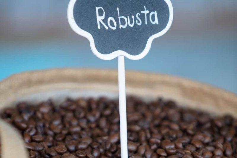 Robusta Coffee beans type