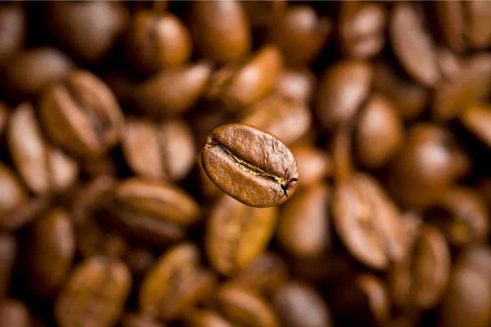Types Of Coffee Beans: The Ultimate Guide