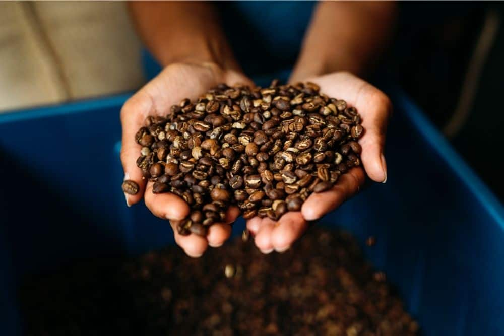 Types Of Coffee Roasts The Ultimate Guide