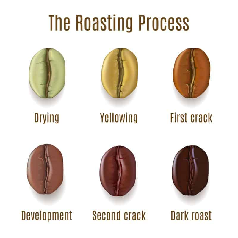 Stages of coffee bean roasting