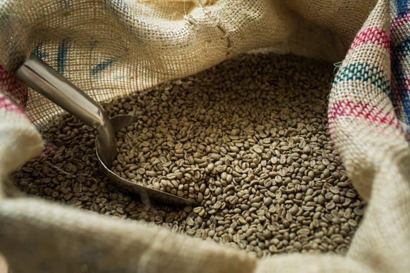 Raw coffee beans in hessian bag