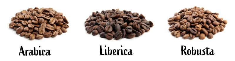 different types of coffee beans on white background.